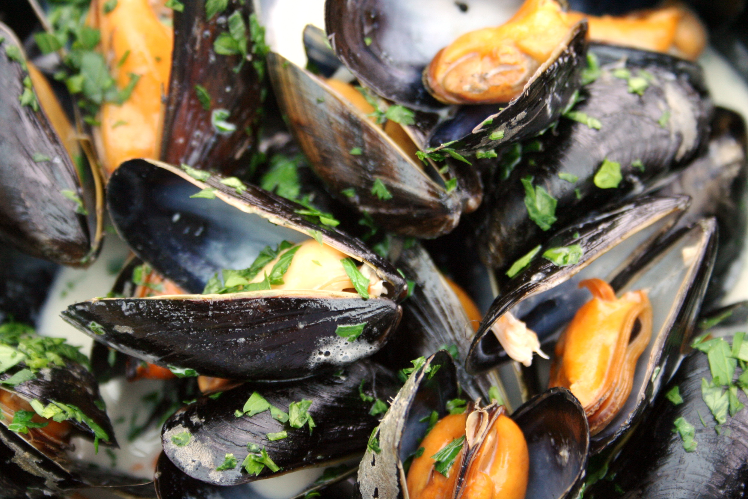 Mussel MONDAYS in the BAR